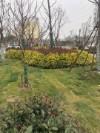 文安县绿艺草坪种植草坪