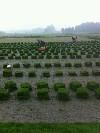 福州大地草皮有限公司