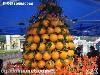 奉节脐橙种植专业合作社